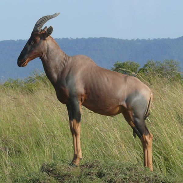 12 Day The Best Of Kenya Safari Gates Adventure Safaris Kenya