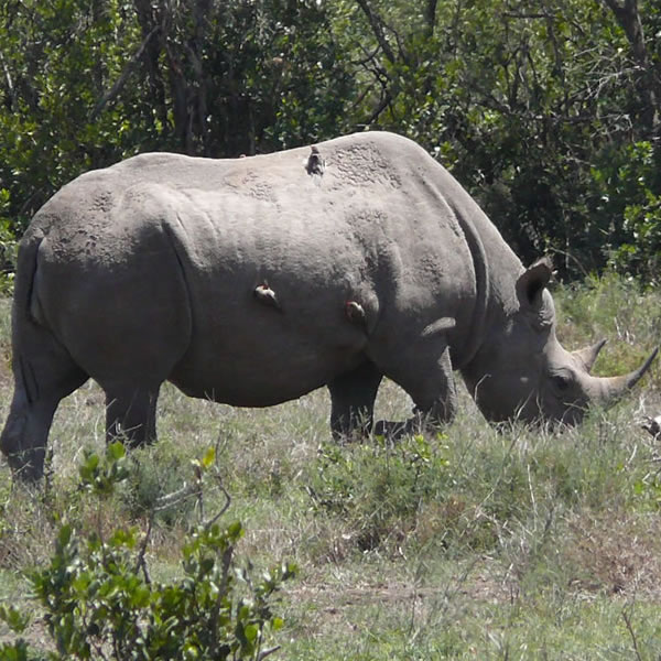 10 Day Best Of East Africa Safari Gates Adventure Safaris Kenya